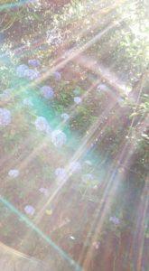 160706_awaji_senzansenkouji01